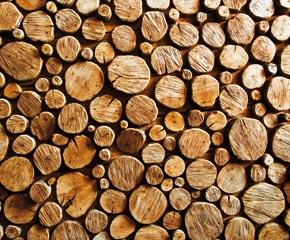 Schon die Auswahl der Holzstämme bildet ein wesentliches Fundament für qualitativ hochwertige Furnierteile.